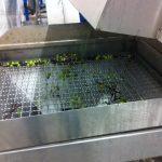 Preparazione Olio | Prodotti | Spazio Sicilia