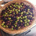 Olive | Prodotti | Spazio Sicilia